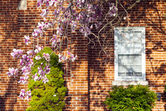 Spring in suburbs royalty free stock photography