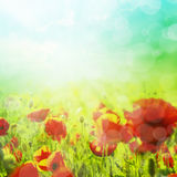 Spring or summer abstract background with bokeh Royalty Free Stock Photography