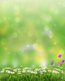 Spring or summer abstract nature background Stock Images