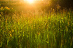 Spring or summer abstract nature background with grass in the me Stock Photos