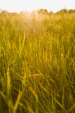Spring or summer abstract nature background with grass in the me Stock Image