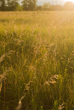 Spring or summer abstract nature background with grass in the me Stock Photo