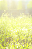 Spring or summer abstract nature background. With grass in the meadow soft warm colors Stock Photos