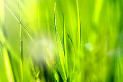 Spring and summer abstract nature background with grass and sun Royalty Free Stock Image