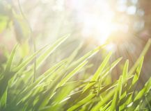 Spring or summer abstract nature background with green grass meadow.  royalty free stock photo