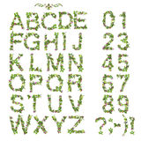 Spring Summer alphabet and number made of flower Stock Photography