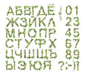 Spring Summer alphabet and number made of flower Royalty Free Stock Photos