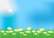 Spring / Summer Background Royalty Free Stock Photos