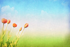 Spring, summer background Stock Image