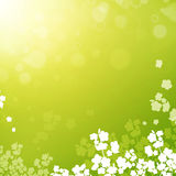 Spring or summer background Stock Photography