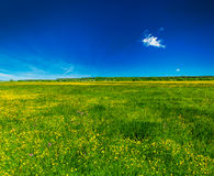Spring summer background - blooming field meadow Stock Images