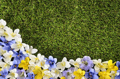 Spring or summer background border. Spring or summer border background with grass and flowers.  Space for copy Stock Photography