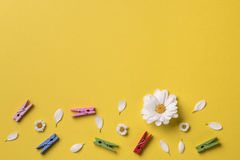 Spring or summer background with copy space for text Royalty Free Stock Photos
