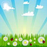 Spring summer background ΠRoyalty Free Stock Image