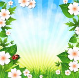 Spring or summer background with grass leaves and flowers and ladybird. Summer background. Grass flowers sky Royalty Free Stock Image