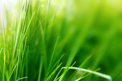 Spring or summer background with green grass Royalty Free Stock Photography