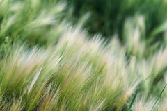 Spring or summer background with green grass Stock Photo
