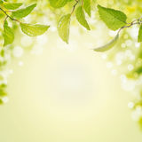 Spring summer background with green leaves,light and bokeh. Frame with place for text Stock Photography