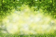 Spring or summer background, green tree leaves frame stock image