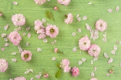 Spring or summer nature background. Pink almond flower, Bud, leaf and petal on green wooden table background, flat lay. Spring or summer background. Pink almond stock photos