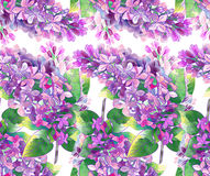 Lilac pattern Stock Photos