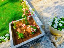Flowers pots in front of house Stock Photography