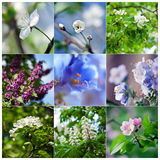 Spring and summer blooming Stock Images
