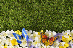 Spring or summer border background Royalty Free Stock Image