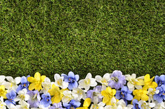 Spring or summer border background. With grass and flowers.  Space for copy Stock Photo