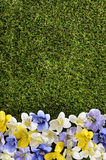 Spring or summer border background. With grass and flowers.  Space for copy Stock Images
