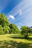 Spring/summer countryside Stock Photography