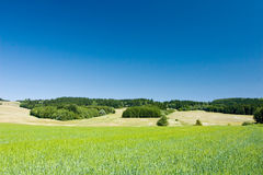 Spring/summer countryside Royalty Free Stock Photo