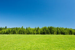 Spring/summer countryside Stock Image
