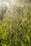 Spring  Summer field with Wild flower in sunset . Bokeh backlight na. Spring  summer field with Wild flower and green grass in sunset . Bokeh backlight natural Stock Photo
