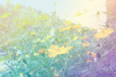 Spring or summer floral abstract background. Flower beautiful.  Royalty Free Stock Image
