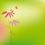 Spring summer floral ladybirds greeting card Royalty Free Stock Image