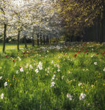 Spring Summer flower meadow landscape in dappled sunlight. Beautiful Spring Summer flower meadow landscape in sunlight Royalty Free Stock Images