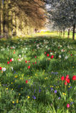 Spring Summer flower meadow landscape in dappled sunlight with s Stock Photos
