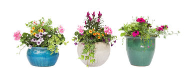 Spring Summer flower pots isolated on white royalty free stock photos