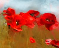 Spring and summer flowers – red poppies field stock photography
