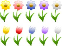 Spring and Summer Flowers. Illustrations of Spring and Summer flowers in various colors Stock Photo