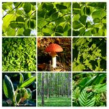 Spring and summer forest  details with mushroom 1 Stock Image