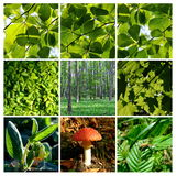 Spring and summer forest  details with mushroom Royalty Free Stock Photo