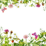 Spring, summer garden: flowers, grass, herbs, butterflies. Floral pattern. Watercolor royalty free stock image