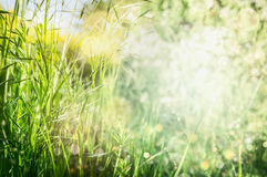Spring or summer grass background in garden or park royalty free stock photo