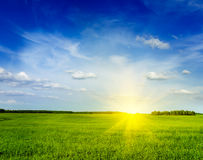Spring summer green field scenery landscape Royalty Free Stock Photo