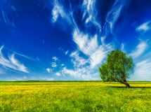 Spring summer green field scenery lanscape with Stock Photos