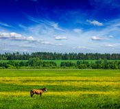 Spring summer green field scenery lanscape with horse stock images