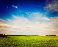 Spring summer green field scenery lanscape Royalty Free Stock Image