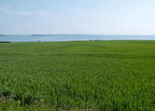 Spring Summer Green Field Sea Background Stock Images